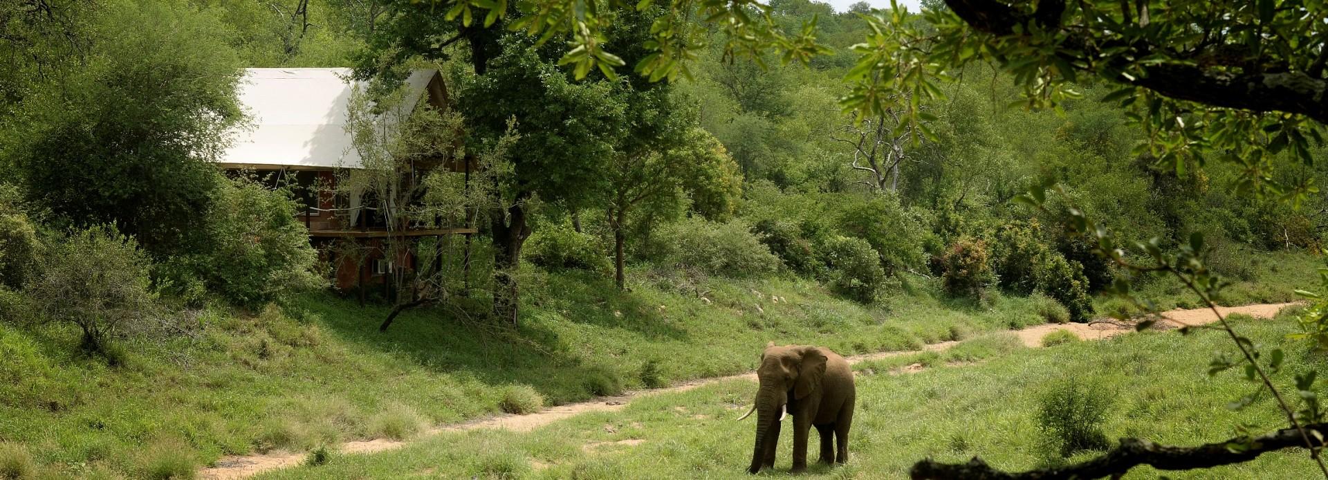 Südafrika Elefant vor einem Zelt des Garonga Safari Camps