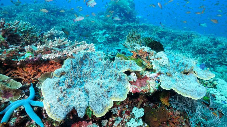 Indonesien Unterwasserwelt von Komodo