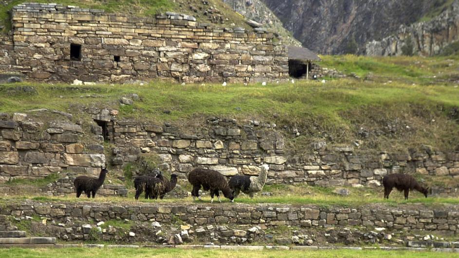 Peru Huaraz Chavin de Huntar Lamas