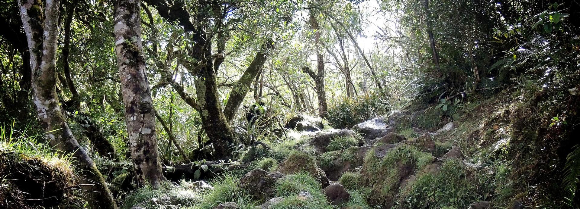 La Réunion Wanderung im Foret de Bebour