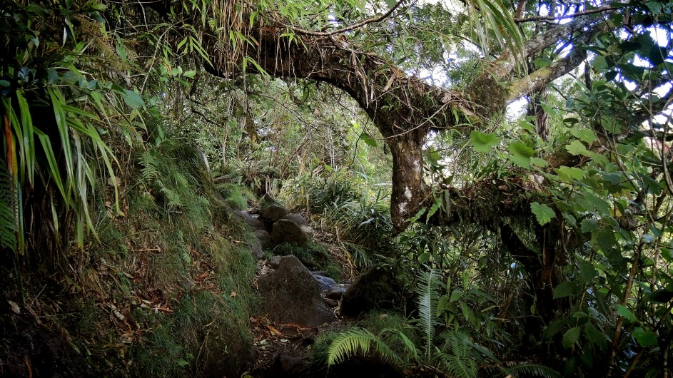 La Réunion Wanderweg im Foret de Bebour
