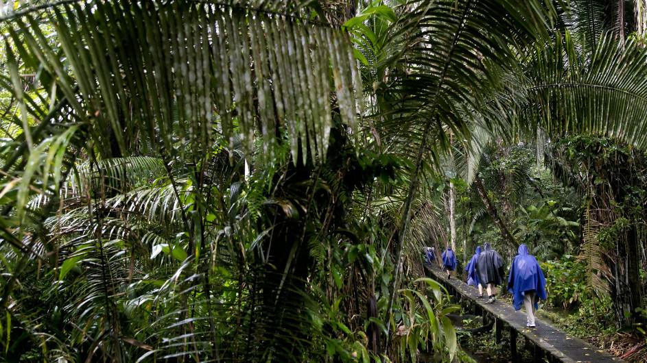 Ecuador - La Selva Ecolodge - Regenwaldwanderung