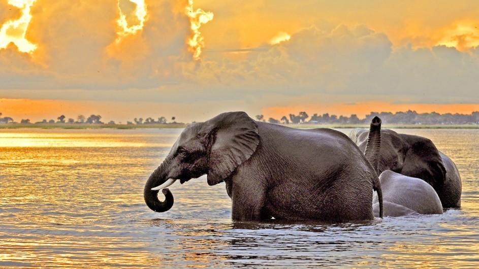 Botswana Elefanten