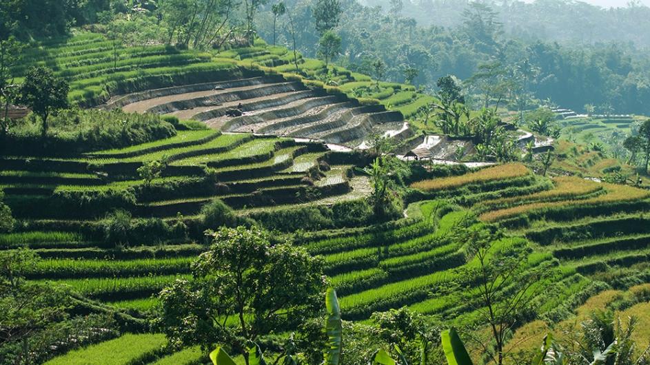 Indonesien - Reisfelder auf Bali