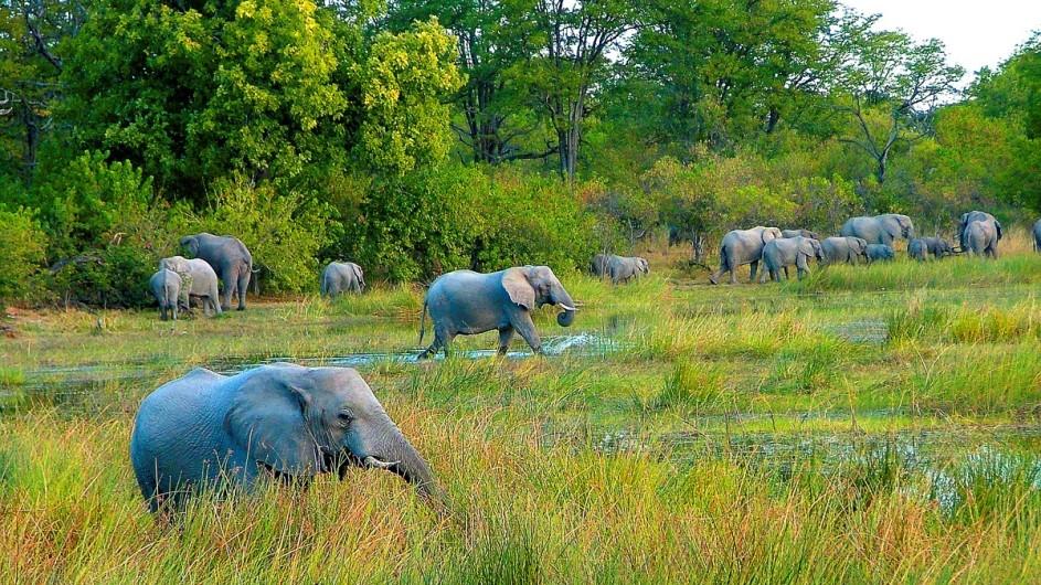 Namibia Caprivi Elefanten