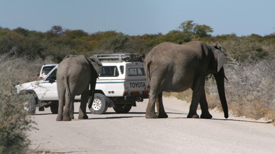 Namibia Etosha Nationalpark Elefanten auf der Straße