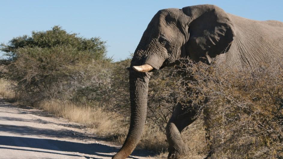 Namibia Etosha Nationalpark Elefant