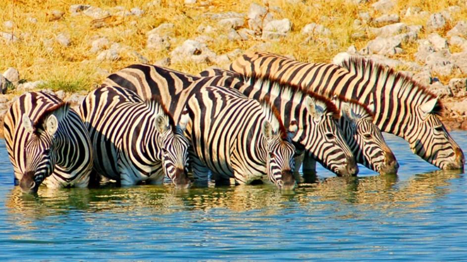 Namibia Zebras im Wasserloch