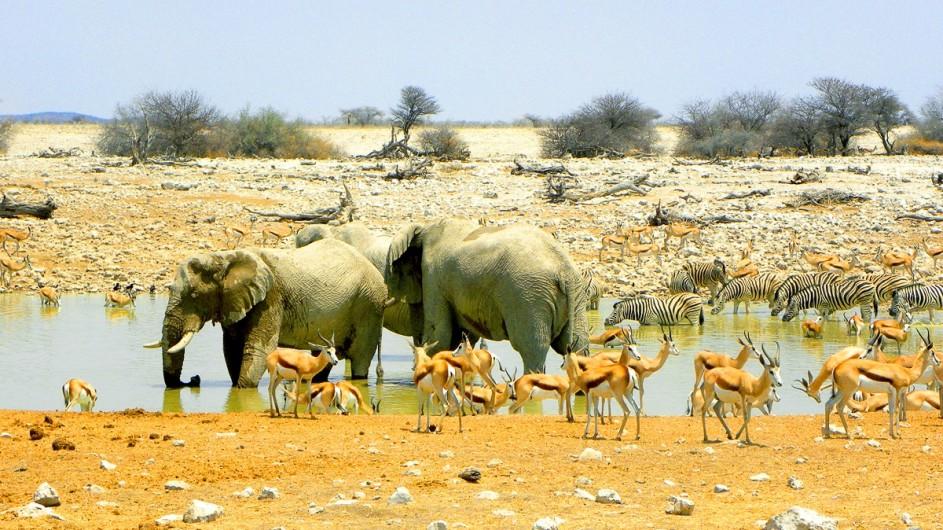 Namibia Elefanten im Etosha Nationalpark