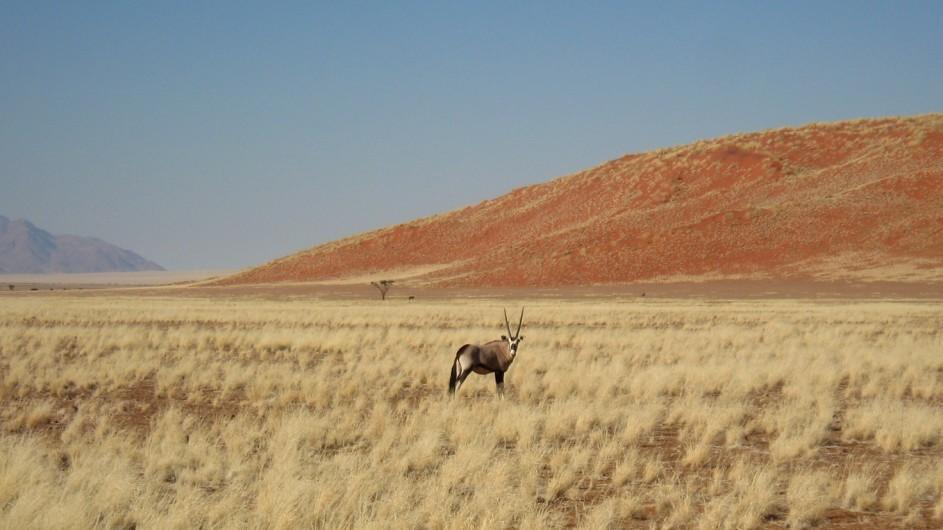 Namibia Oryx in der Namib Wüste