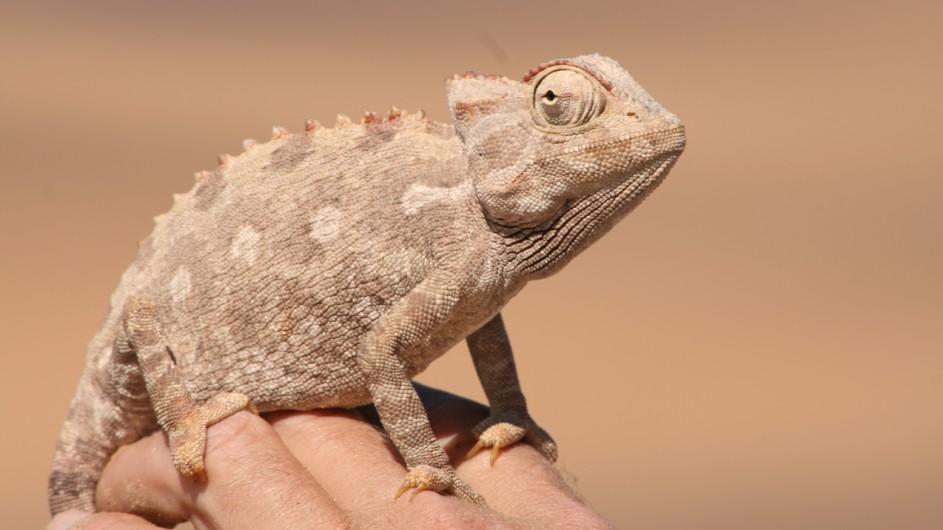 Namibia Swakopmund kleine Tiere ganz groß