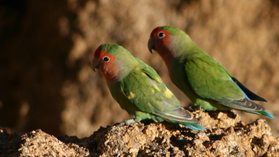 Namibia Vögel