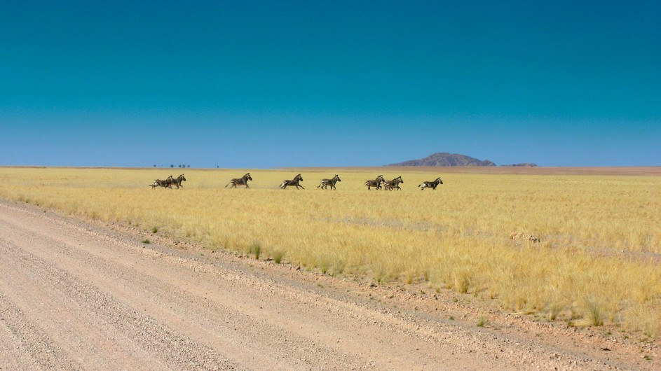Namibia Zebras in der Namib