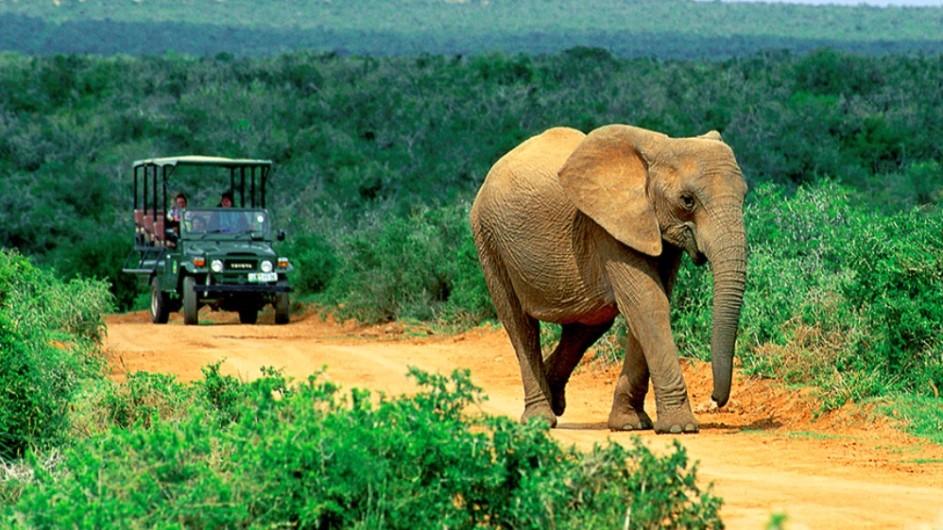 Südafrika Pirschfahrt mit Elefant