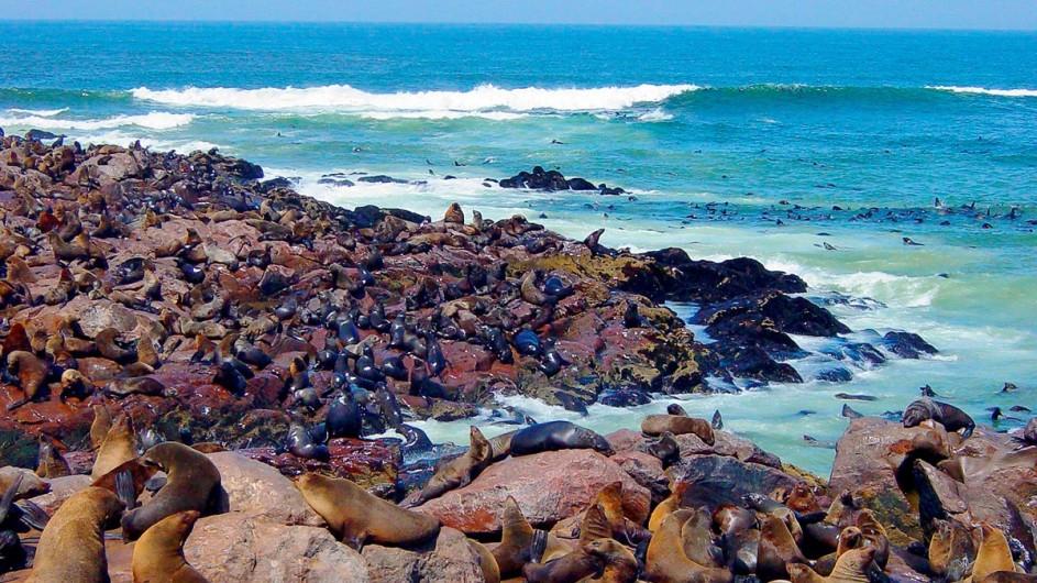 Südafrika Robben