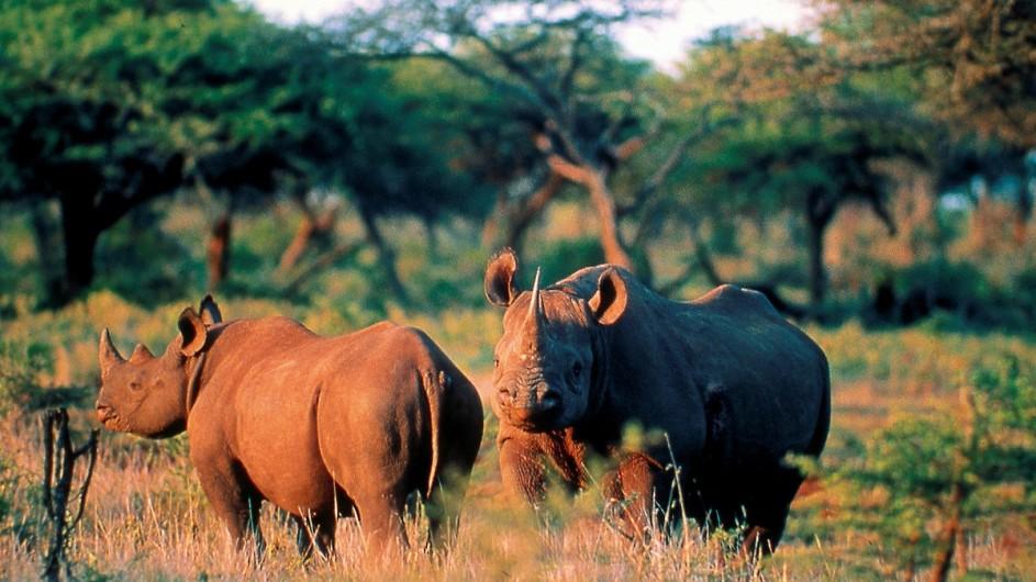 Südafrika Nashörner