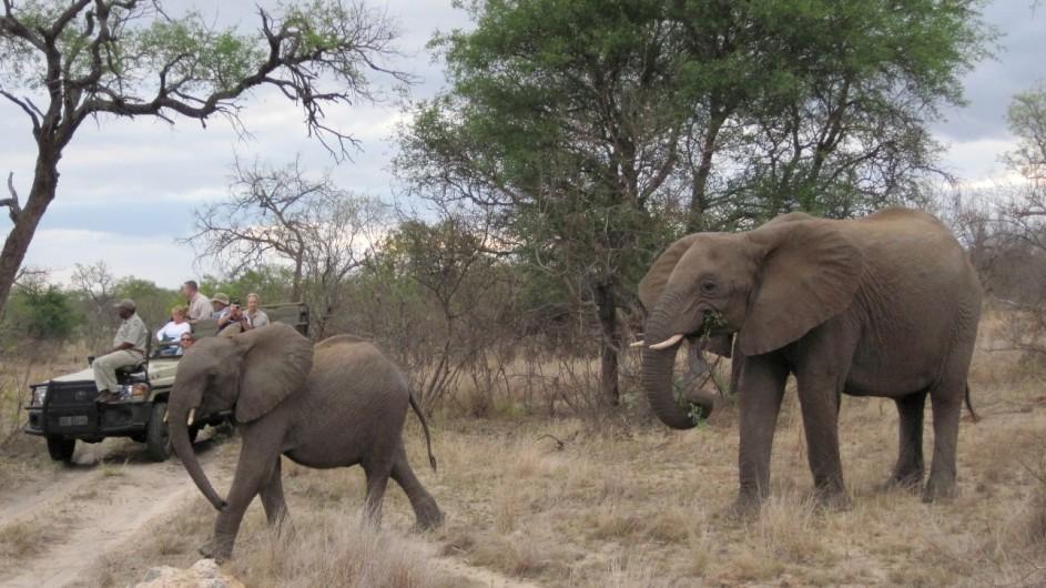 Südafrika Mohlabetsi Safari Lodge Pirschfahrt