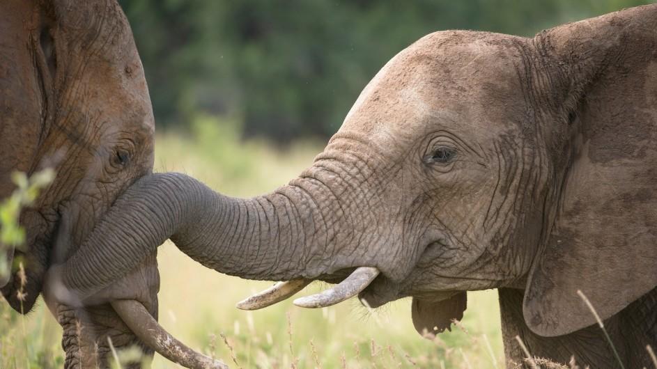 Südafrika Krüger Nationalpark Elefant