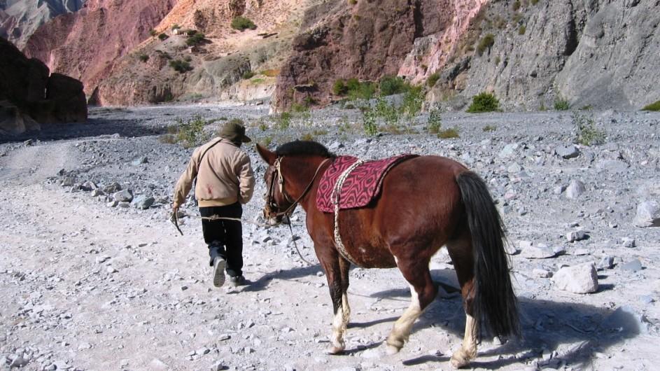 Argentinien Valle Calchaqui Pferd