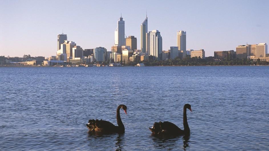 Australien Westaustralien Perth schwarze Schwäne