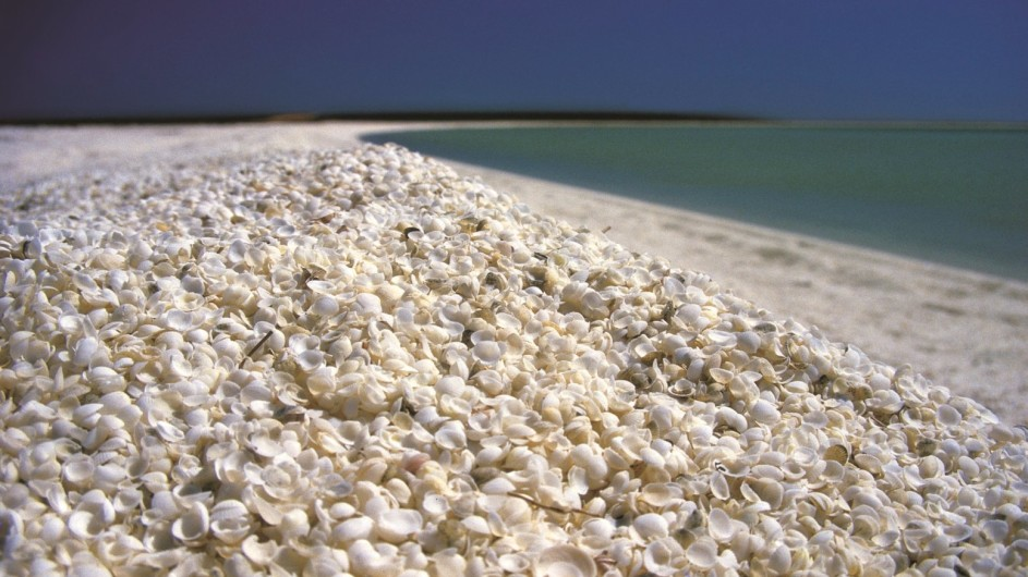 Australien Westaustarlien Shell Beach Shark Bay