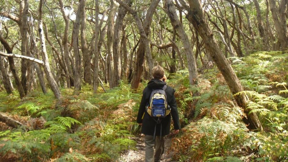 Australien Great Ocean Walk Wanderung