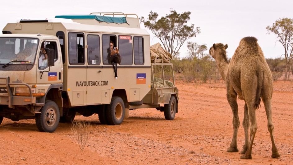 Australien Red Center Kamelbegegnung