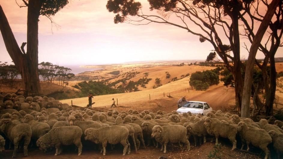 Australien Kangaroo Island Selfdrive