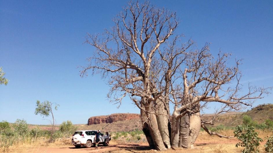 Australien - Kimberley - El Questro Wilderness Park - c Tourism Australia Rich Keam