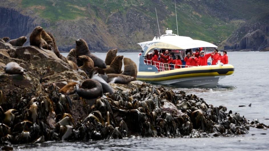 Australien Tasmanien Flagship Seehunde Bruny Island