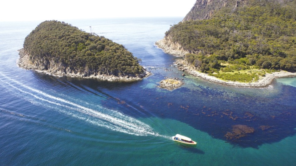 Australien Tasmanien Cape Penguin Island