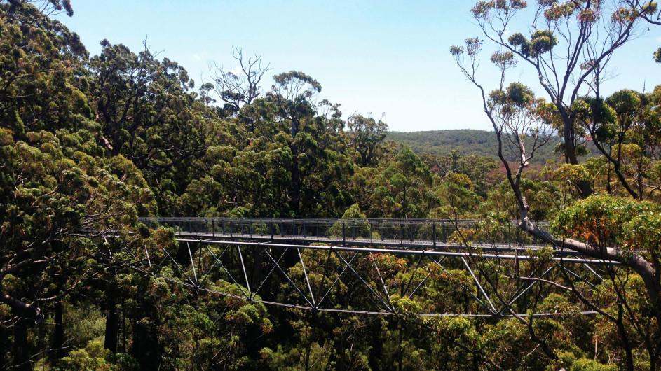 Australien Valley of the Giants Tree Top Walk