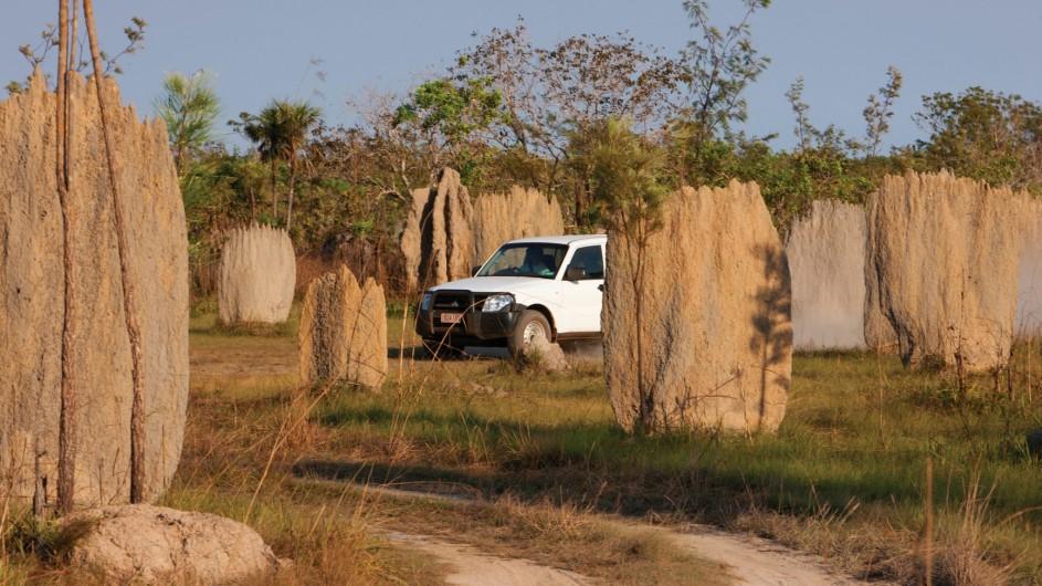 Australien Roadtrip Termitenhügel Top End