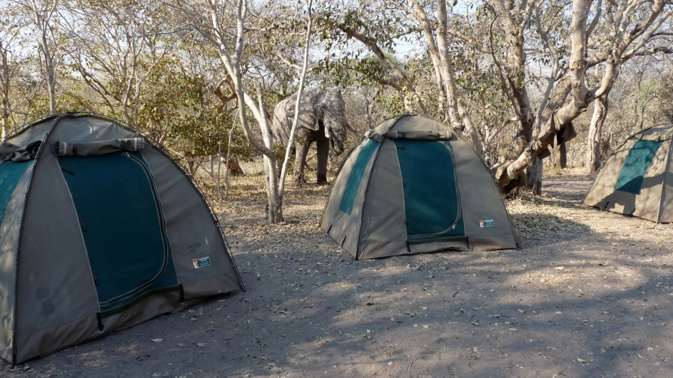 Botswana Chobe Nationalpark Elefant im Camp