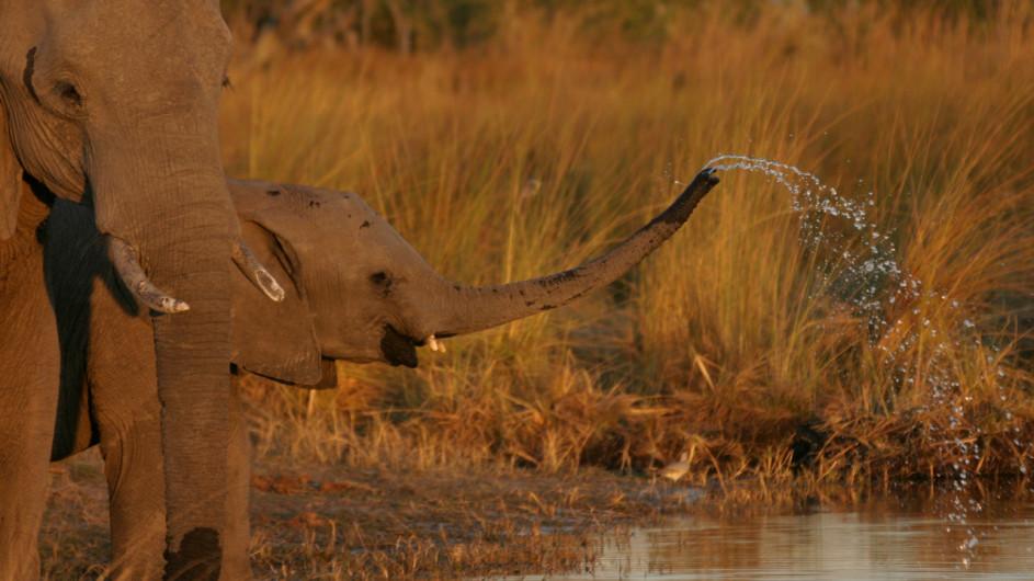 Botswana Elefanten im Moremi Game Reserve