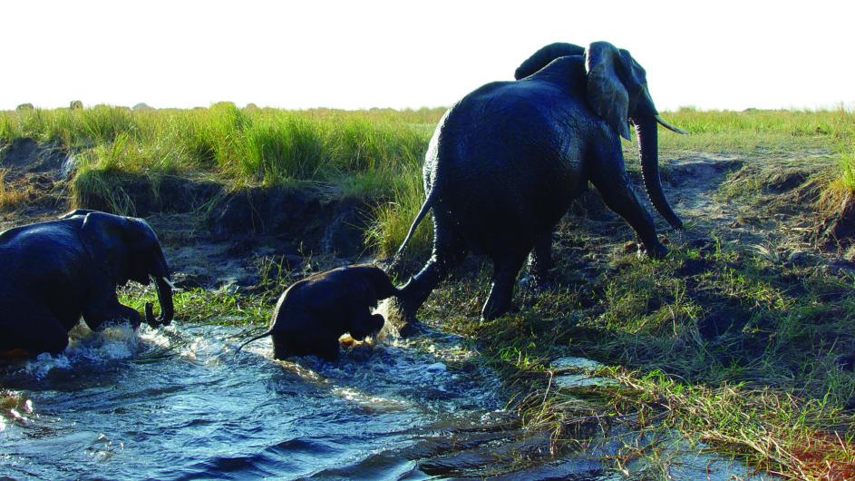 Botswana Chobe Safari Lodge Elefanten