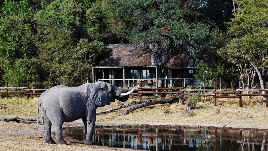 Botswana Savute Safari Lodge Elefant vor Camp