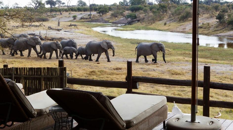 Botswana Savute Safari Lodge Terrasse mit Blick auf Elefanten
