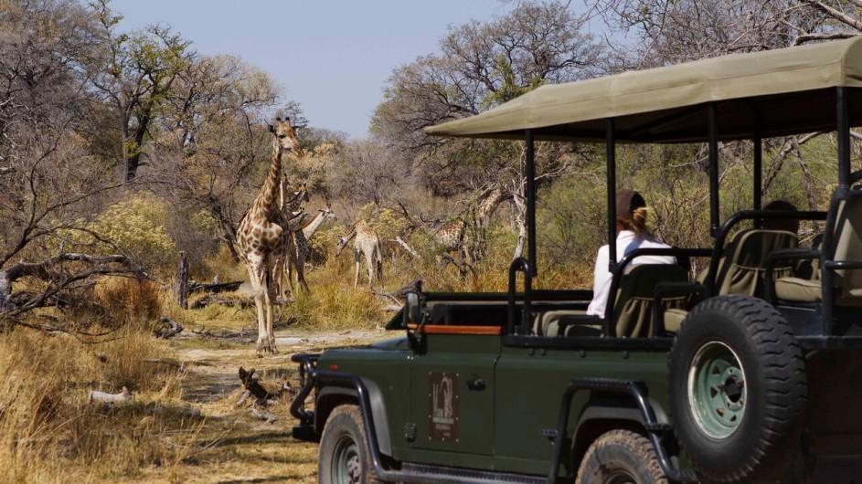 Botswana Camp Xakanaxa Pirschfahrt Giraffe