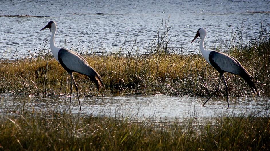 Botswana Vögel in der Kalahari