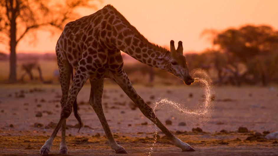 Botswana Little Kwara Camp