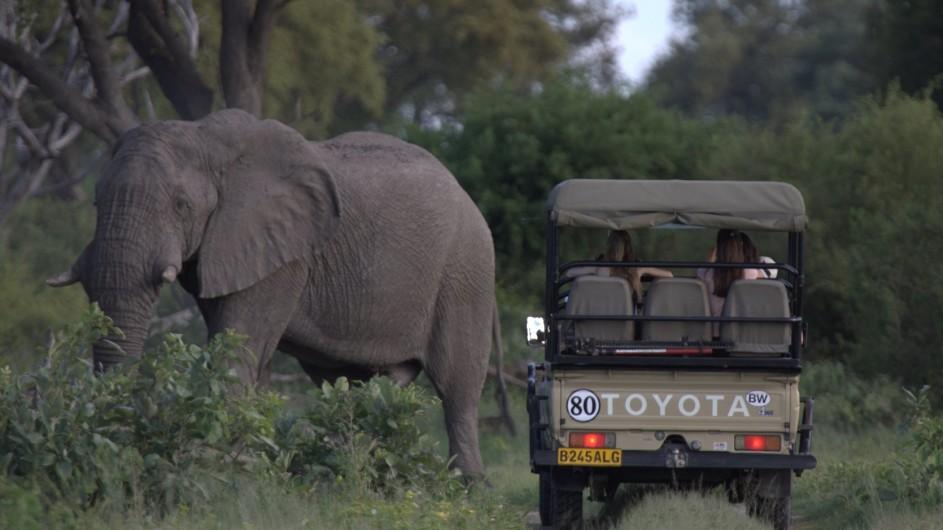 Botswana Letaka Safaris Pirschfahrt Elefant