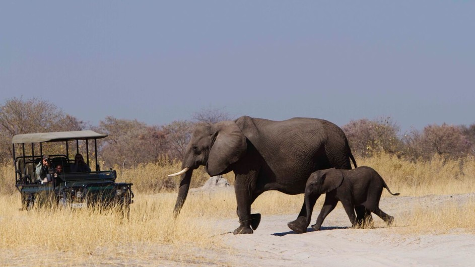 Botswana Moremi Game Reserve Camp Xakanaxa Pirschfahrt Elefanten