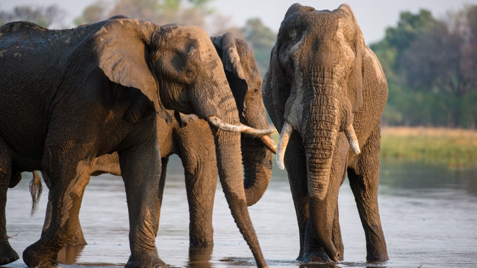 Botswana Sundway Safaris Elefanten im Moremi Game Reserve