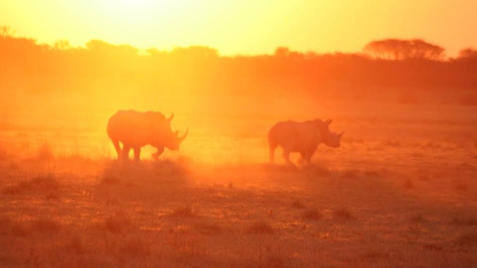 Botswana Sunway Safaris Nashörner