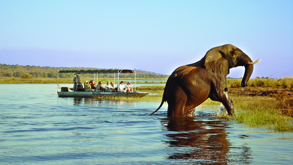 Botswana Chobe Safari Lodge Bootsausflug Elefant