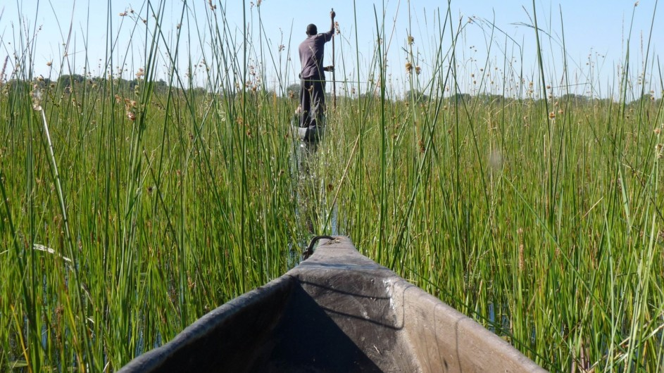 Botswana Mokorofahrt im Okavango Delta