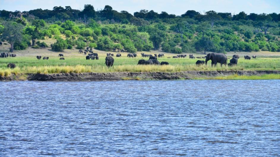 Botswana Chobe Princess Aussicht Elefanten