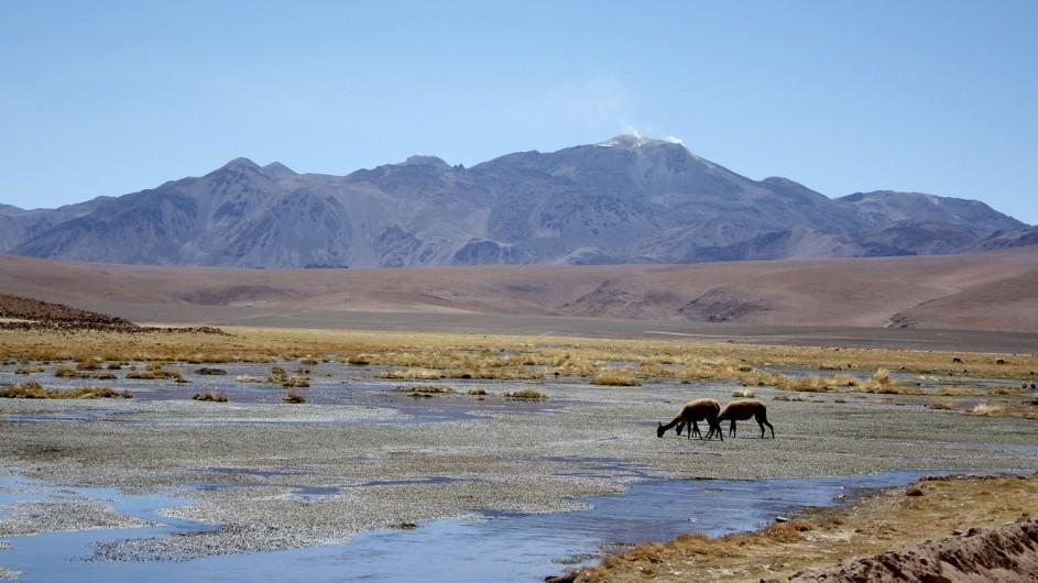 Chile Atacama Wüste Lamas