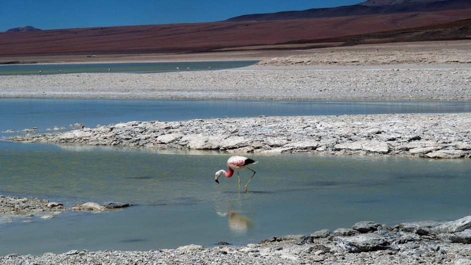 Chile Atacama Wüste Falmingo imSalzsee